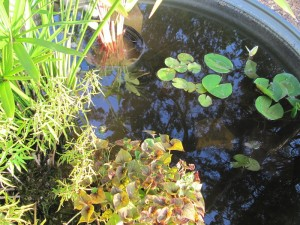 The New Pond inside